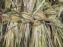 Wicker grass Stock Image