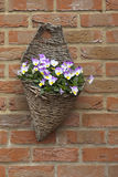 Wicker hanging basket Stock Photography