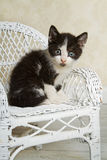 Wicker Kitty Royalty Free Stock Photography