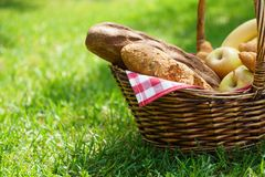 Wicker picnic basket with food on green grass. Warm natural sunlight. Bread and fresh ts for snack royalty free stock images