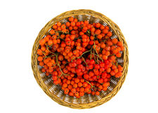 Wicker wooden plate wit rowan berry isolated on white Royalty Free Stock Photos