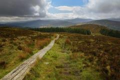 Wicklow-Weisenspur, die zu die vibrierende irische Landschaft führt Lizenzfreie Stockfotografie