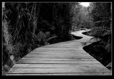 Wicklung Forrest-Weg lizenzfreie stockfotos