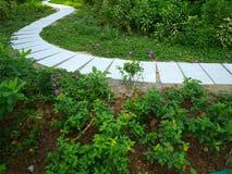 Wicklung-Pfad im Garten Stockfotos
