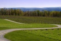 Wicklung-Straße im Wein-Land Lizenzfreies Stockfoto