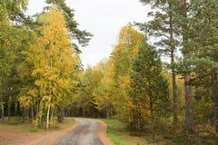 Wicklungslandstraße durch einen Fall färbte Wald Stockbilder
