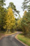 Wicklungslandstraße in einem bunten Wald Stockfoto