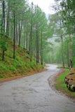 Wicklungstraßen durch Himalajawaldvorbehalt Indien Stockfotografie