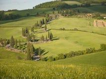 Wicklungzypresseweg in Toskana Lizenzfreies Stockbild