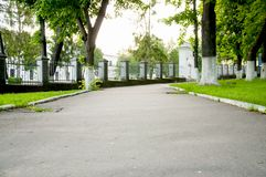 Wide alley, on both sides of the lawn with bright green grass. Big trees stock photography