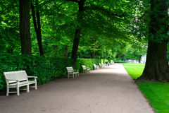 Wide alley with white benches in green summer Lazienki park. In shadow of trees. Wide alley with white benches in green summer Lazienki park with old big trees stock photo