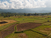 Wide angle of agriculture field under sunny day. Aerial view Royalty Free Stock Photo