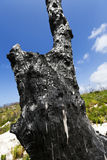 Burnt Tree Trunk in the Wild Stock Images