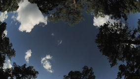 Wide angle clouds passing treetops timelapse. Video of wide angle clouds passing treetops timelapse stock video