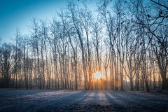 Wide angle cold winter sunrise with frozen grass and sun rising. Behind trees in a park. Orange and blue. Contrasty picture with very warm and very cold tones Royalty Free Stock Photography