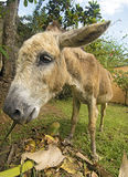 Donkey Wide Angle Royalty Free Stock Photos