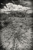 Wide Angle of Dry Shrub. Wide angle view of dry shrub in desert wilderness Royalty Free Stock Images
