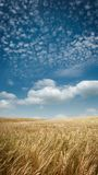 Wide angle Golden Fields Royalty Free Stock Photo