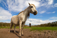 Wide angle horse Royalty Free Stock Image