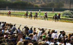 Wide angle of Horses racing Royalty Free Stock Photos