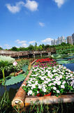 Wide angle landscape. Colorful flowers under the blue sky royalty free stock photo