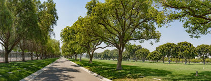 Wide Angle Lane with Trees Stock Image