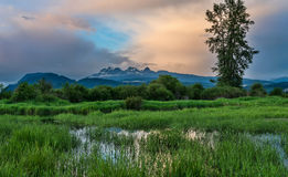 Wide Angle of Marsh in Foreground and Background mountains Royalty Free Stock Image