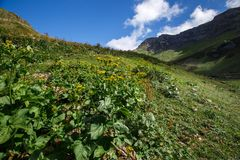 Wide angle photo of wild flowers in mountain valley. Royalty Free Stock Photography
