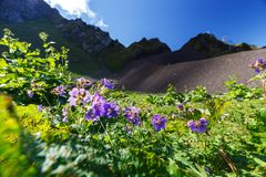 Wide angle photo of wild flowers in mountain valley. Royalty Free Stock Photos