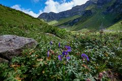 Wide angle photo of wild flowers in mountain valley. Stock Photos