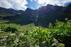 Wide angle photo of wild flowers in mountain valley. Stock Photography