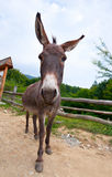 Wide angle shot of donkey Stock Photo