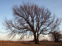 Wide angle tree Stock Photos
