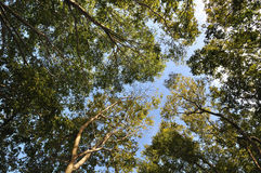 Wide angle of tree branches Stock Images
