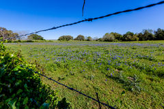 A Wide Angle View of a Beautiful Field Blanketed Royalty Free Stock Photo