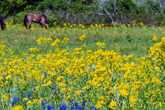 A Wide Angle View of a Field Full of Wildflowers and Horses. Royalty Free Stock Image