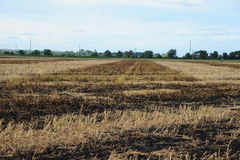 Crop field that has been burned to clear crop residue. Often called field burning, this technique is used to clear the land of any existing crop residue as well Royalty Free Stock Photo