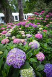 Wide angle view of the flowers in the garden Royalty Free Stock Images