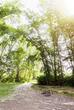 Wide angle view in forest with green trees and bright sun. Stock Photos
