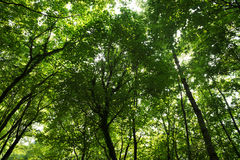 Wide angle view of forest and sun rays Stock Photo
