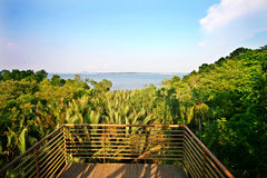 Wide angle view from forest watch tower at Singapo. A beautiful wide angle view of rain forest and sea from a watch tower royalty free stock photos