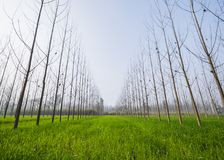 Wide-angle view of a green sheet field royalty free stock photos