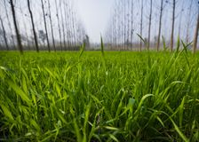 Wide-angle view of a green sheet field stock images