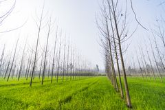 Wide-angle view of a green sheet field royalty free stock image