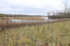 November Marsh. Wide angle view of marsh in late autumn Stock Photography