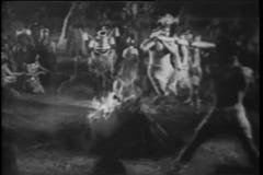 Wide angle view Polynesian animal ritual stock video