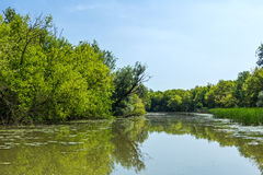 Wide angle view on river with reflection of forest at the water. Stock Photos