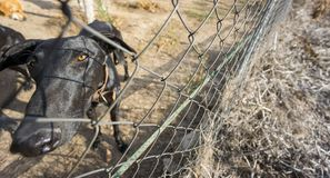 Wide angle view of Sad dog locked behind fence Stock Photography