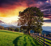 Wide Angle View of a Wooden Fence Under Stock Photography