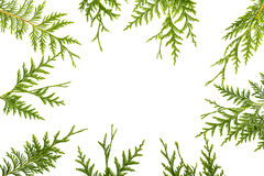 Wide arch shaped Christmas border on white, composed of fresh fir branches Royalty Free Stock Image
